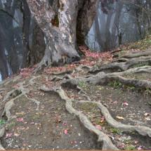 070_nepal-2012-bachinger-kinga-reka_fotoreise_wurzelimperium