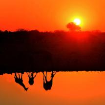 074_namibia-2013-anke-berger-namfam-180713-giraffentreff-am-wasserloch