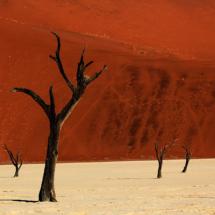 075_namibia-2013-anke-berger-namfam-270713-abgestorben