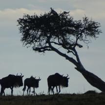 17_16-Punkte_Kenia_2014_Thomas_Kuehn_KENSEY-151114-am-Abend-in-der-Massai-Mara