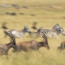 13_KEN_2019_4SAS_Sascha_Schorstädt_KENFO4-170819_Top_vs_Zebra.jpg
